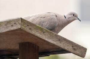 vogels-in-de-tuin-004