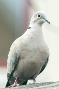 vogels-in-de-tuin-006