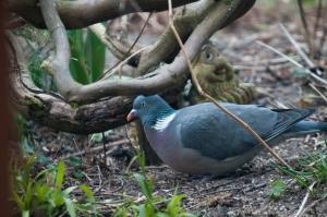 vogels-in-de-tuin-008