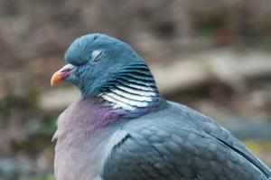 vogels-in-de-tuin-018