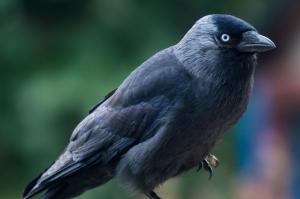 vogels-in-de-tuin-021