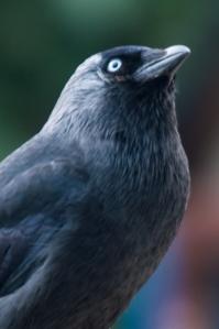vogels-in-de-tuin-022