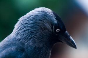 vogels-in-de-tuin-024